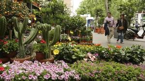 Imagen del exterior de Flores Navarro, con plantas en la acera de lacalle de València.
