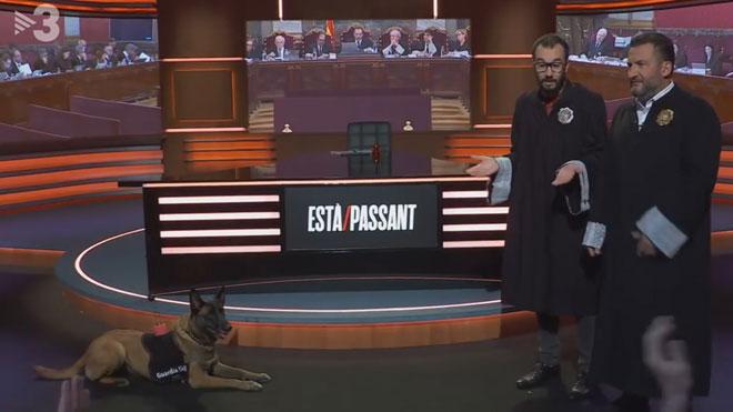 El 'jutge' Toni Soler interroga un gos guàrdia civil