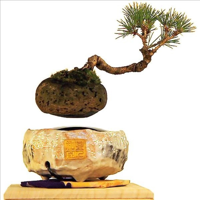 El bonsái flotante