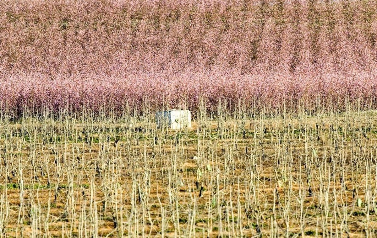 Campos de Lleida en primavera.