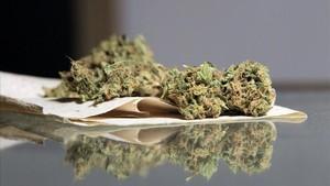 Marihuana en un club cannábico