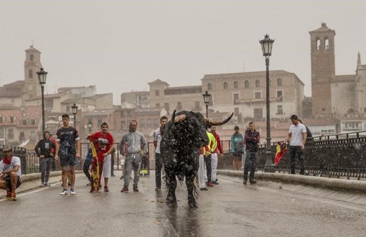 El Toro de la Peña, en el momento de cruzar el puente sobre el Duero, bajo un intenso aguacero.