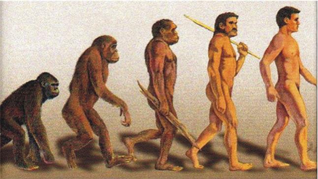 Evolució de laustralopithecus, lhomo erectus i lhomo sapiens a lhome.