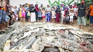 Residentes locales observan una montaña de cadáveres de cocodrilos en una granja de cria en Sorong, Indonesia.