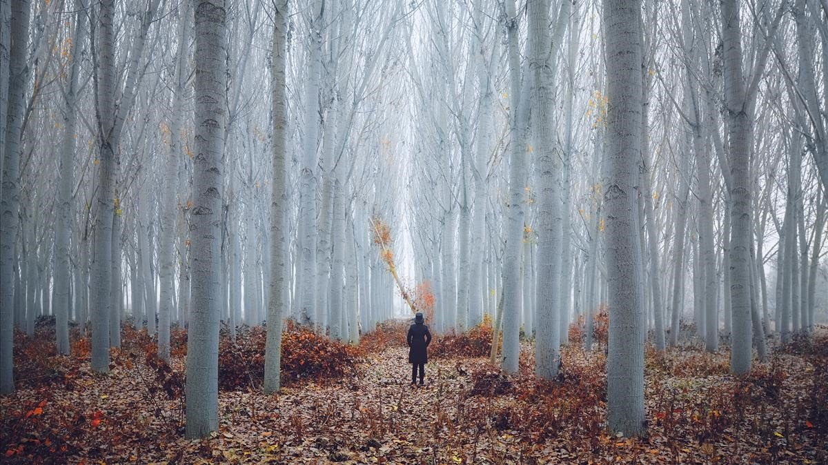 Realitats imaginàries. Aida Pascual aporta esta boscosa fotografía a la muestra colectiva de la galería Fifty Dots.