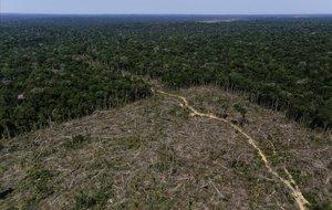 Bolsonaro advoca per legalitzar la mineria en terres indígenes de l'Amazònia