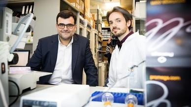 Una nova estratègia d'immunoteràpia cura el càncer de còlon en ratolins