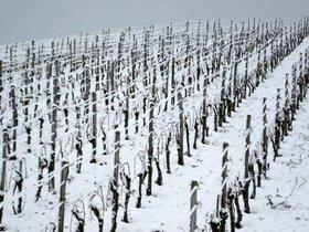 Alemania se queda sin vino de hielo por la crisis climática