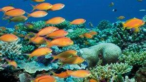 La investigación midió la temperatura submarina en 457 arrecifes de 49 islas de la zona central y occidental del Pacífico entre 2001 y 2017.