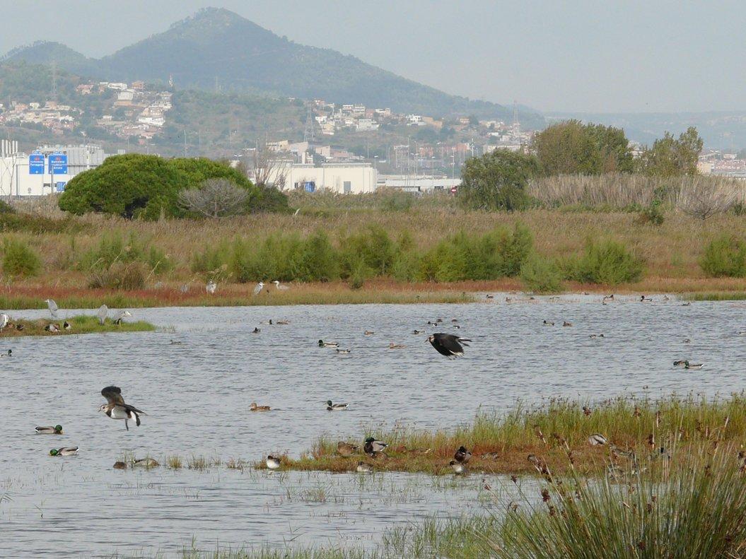 Delta del Llobregat.