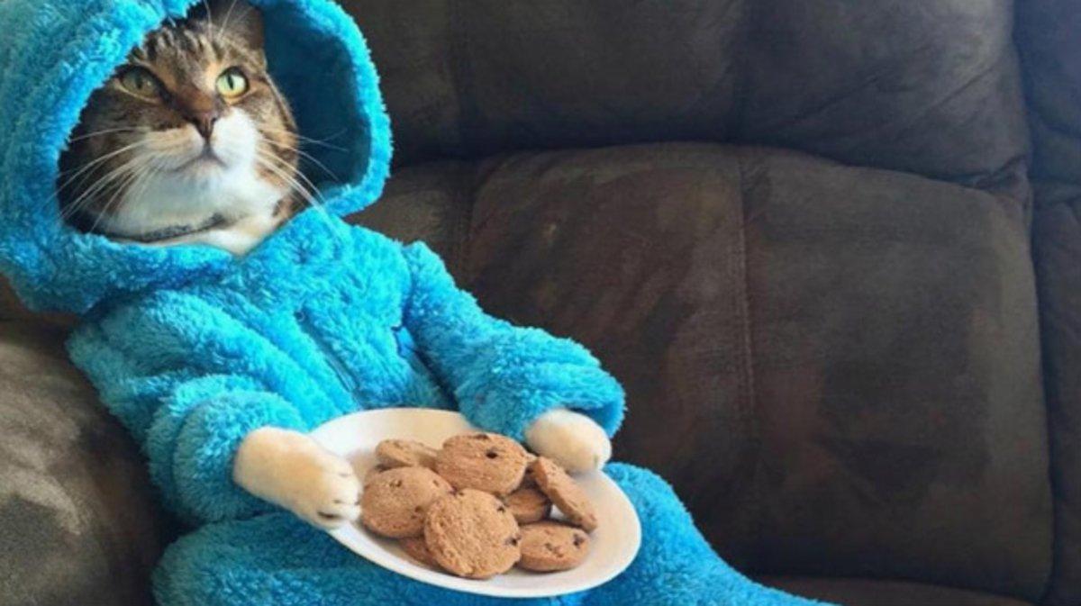 El gato en pijama protagonista de la historia.