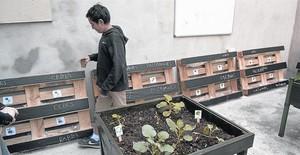 Un menor observa el huerto urbano que la asociación Aprenem ha abierto en el barrio del Poblenou, el día de su inauguración, el 1 de noviembre.