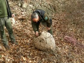 Agentes rurales examinando el nido después de haberlo descolgado de un árbol.