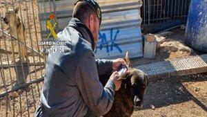 La Guardia Civil detiene a la dueña de una protectora de animales como responsable de la muerte de casi 500 animales
