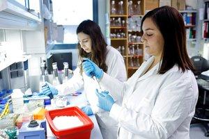 Investigadores del projecte SUMO: Inhibició de la SUMOilació com a estratÃ?gia de descobriment de fàrmacs (Centre de Recerca en Agrigenòmica (CRAG)). A la tercera convocatòria de CaixaImpulse es van presentar 80 iniciatives, 73 de les quals procedeixen de 57 centres de recerca, universitats i hospitals d'Espanya, i les altres 7 de Portugal. Una vegada valorats els projectes, el comitÃ? d'experts en van seleccionar 23, dels quals 11 s'emmarquen dins del camp de les ciÃ?ncies de la vida, i 12 pertanyen a les ciÃ?ncies mÃ?diques i de la salut. El programa de CaixaImpulse de l'Obra Social la Caixa està coorganitzat amb Caixa Capital Risc. Amb aquest projecte, totes dues institucions posen la seva experiÃ?ncia en els àmbits de la recerca, la creació, el desenvolupament i la inversió en empreses en fases inicials al servei d'un objectiu compartit: la transferÃ?ncia dels resultats de la recerca a la societat. FOTOGRAFO: MARC GUILLEN