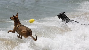 La platja de gossos obre amb totes les garanties