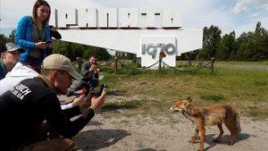 Turistas fotografían un zorro en el pueblo fantasma de Pripyat, cerca de Chernobyl.