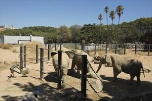 Un cuidador serveix aliment als elefants del Zoo de Barcelona.