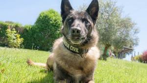 Este es Elton, el perro que busca a Gabriel