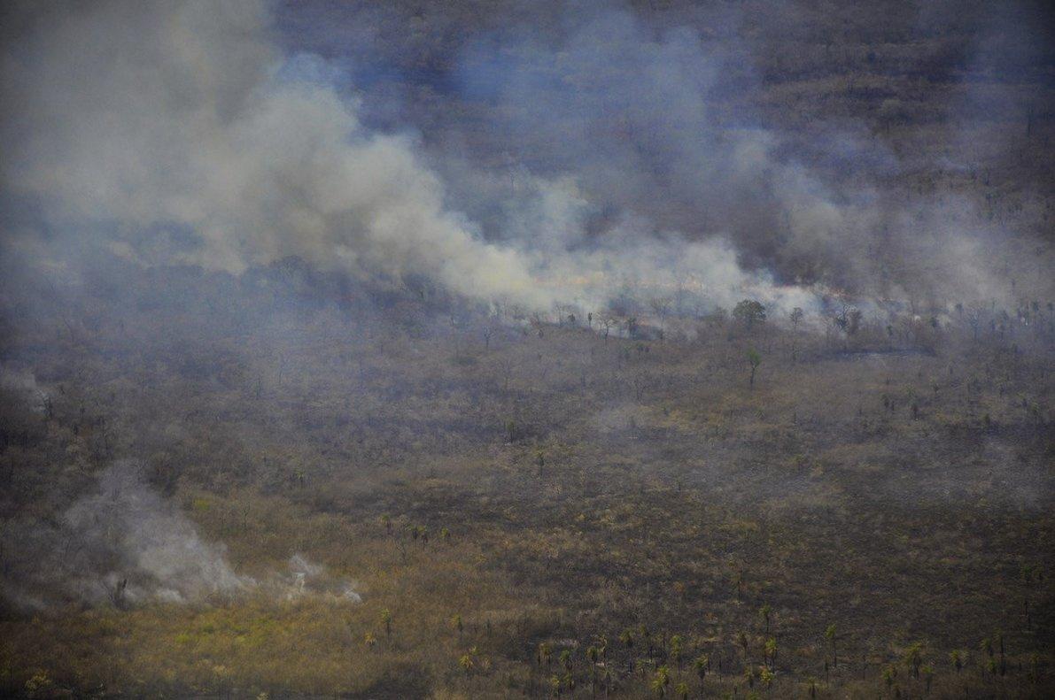 Los incendios forestales arrasan con miles dehectáreas de selva en Brasil. EFE