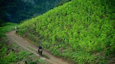 El territorio dedicado al cultivo de la hoja de coca en Colombia crece un 17%