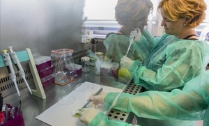 Análisis de un muestra afectada por la Xylella fastidiosa en el Laboratorio Nacional de Referencia para Bacterias Filopatógenas de València.