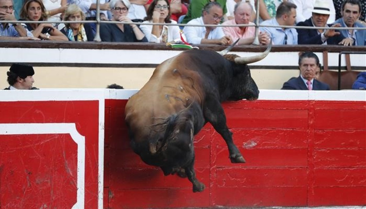 Mitos y mentiras sobre el toro bravo
