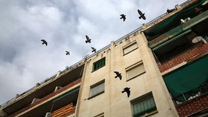 Varios pájaros vuelan encima del edificio en el que vivía el bebé maltratado con sus padres y el abuelo.
