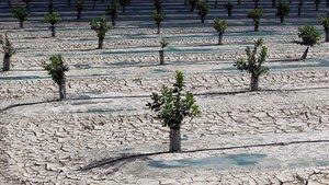 Vista general de los campos de la huerta de Orihuela, afectados por la falta de precipitaciones