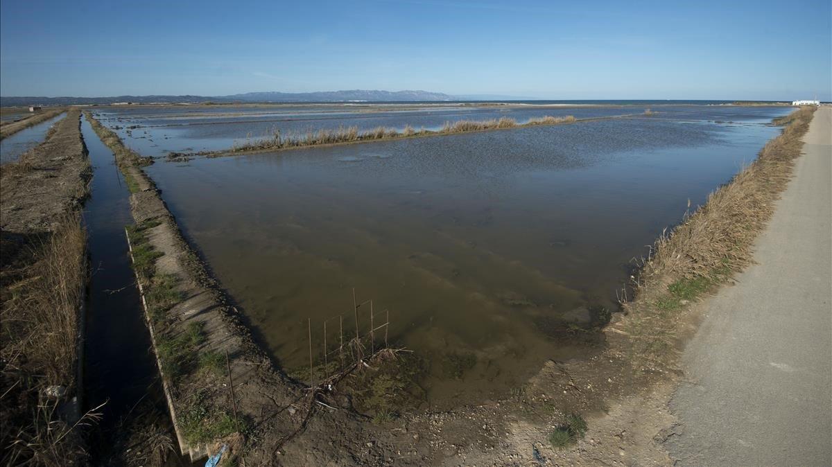 Muchos de los campos de arroz que fueron invadidos por el agua de mar permanecen ahora inundados con agua dulce para así intentar eliminar la sal del terreno