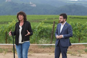 El Departament d'Agricultura concedirà més de 20 milions d'euros a autònoms i empreses del sector primari afectats per la Covid-19