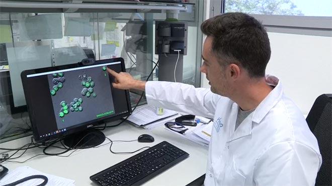 Investigadors de la Vall d'Hebron descobreixen com eliminar les cèl·lules dorments del càncer