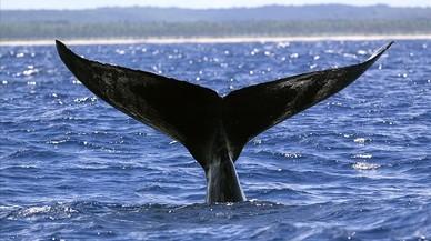 Balenes