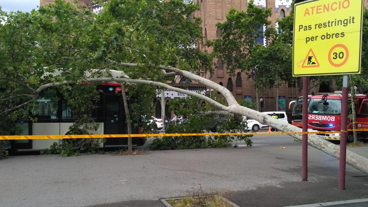 Un árbol cae sobre un autobús en Barcelona sin causar heridos.