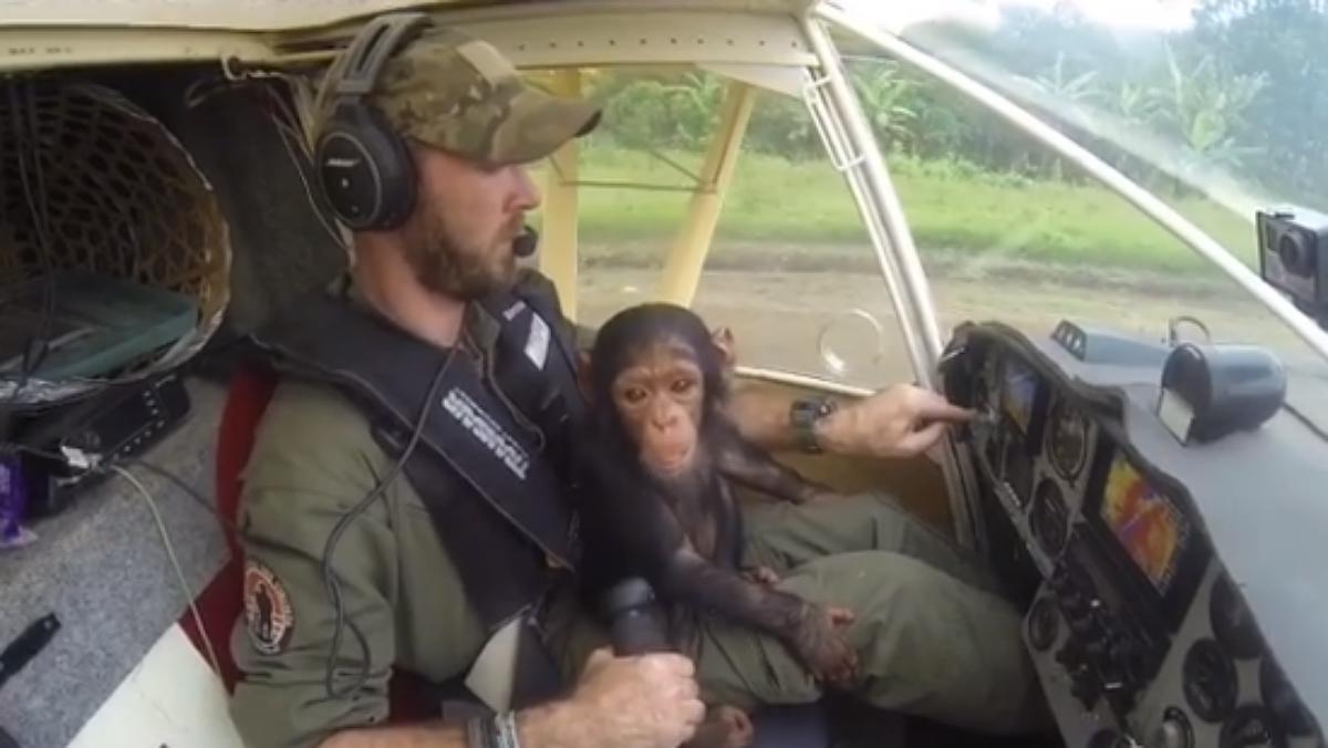 Anthony Caere llevó en su regazo a la cría de chimpancé que acababan de rescatar de los cazadores furtivos en el Congo.