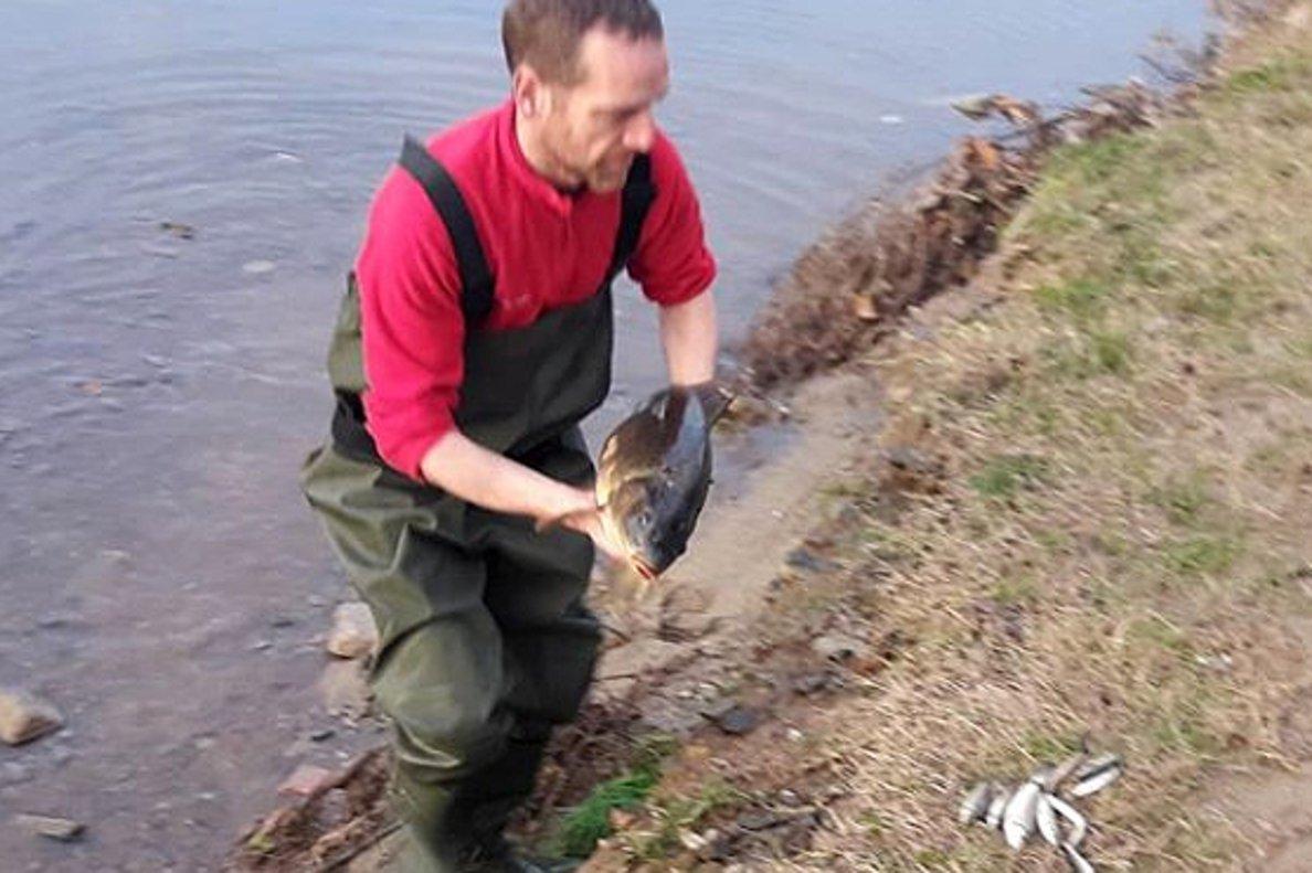 Un hombre saca un pez muerto del río Besòs.