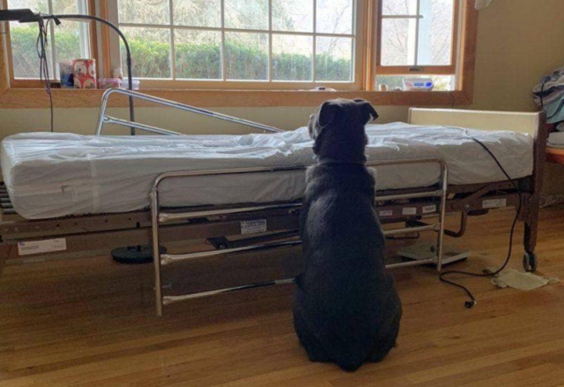 Moose, el perro que esperó a los pies de la cama de hospital de su dueño fallecido