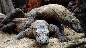La castedat sobrevola el Zoo de Barcelona