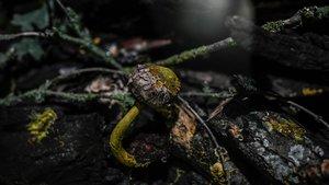 'Blob', el extraño organismo unicelular amorfo, crece sobre un hongo expuesto en los jardines del zoo de París