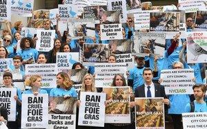 Activistas por los derechos de los animales organizan una manifestación en apoyo de un proyecto de ley para prohibir la venta de foie gras en Nueva York
