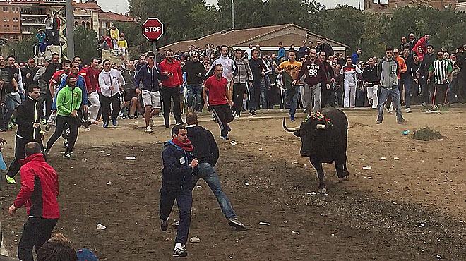 Avalancha de animalistas ante la llegada del Toro de la Vega.