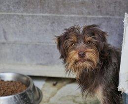 Uno de los perros rescatados por la Guardia Urbana en el barrio de Sant Andreu