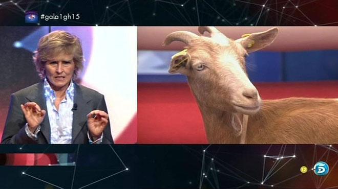 Merceditas Milà y la cabra Rubia en la ratomaquia de Gran hermano (Tele 5).