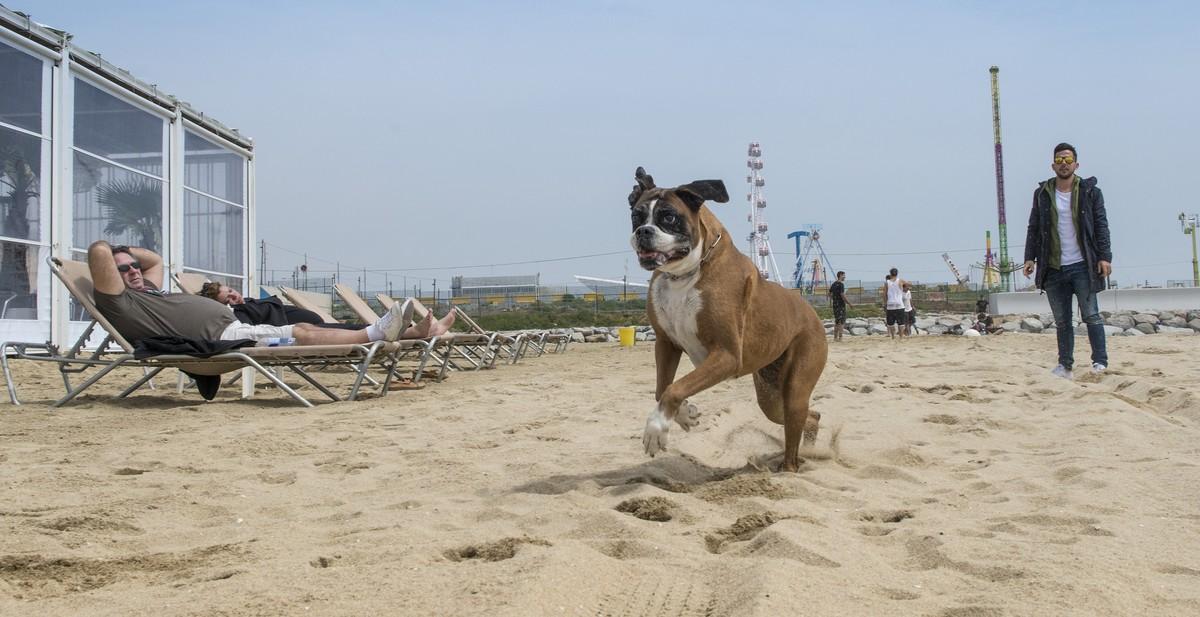 Com gat i gos a la platja de Barcelona