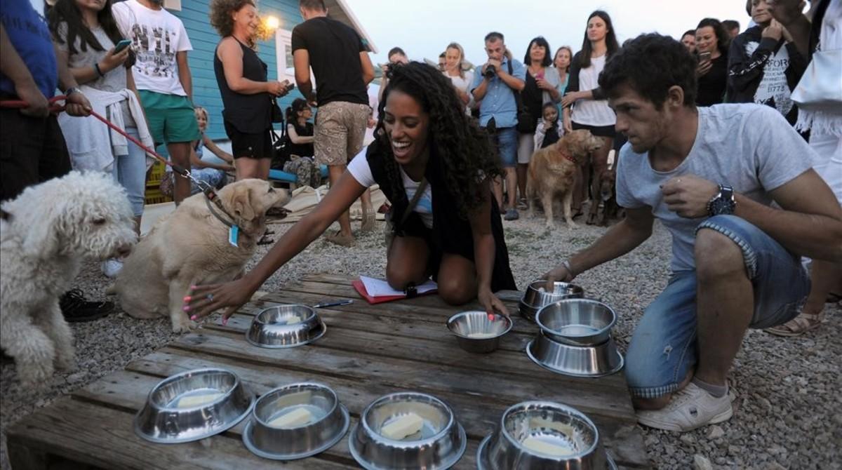 Preparativos para la competición de comida en el chiringuito para perros de Croacia.