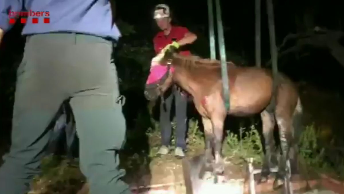 Los Bombers rescatan a un caballo que había caído en una fosa séptica en Terrassa.