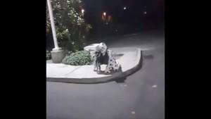 Vídeos de avistamientos de payasos terroríficos.