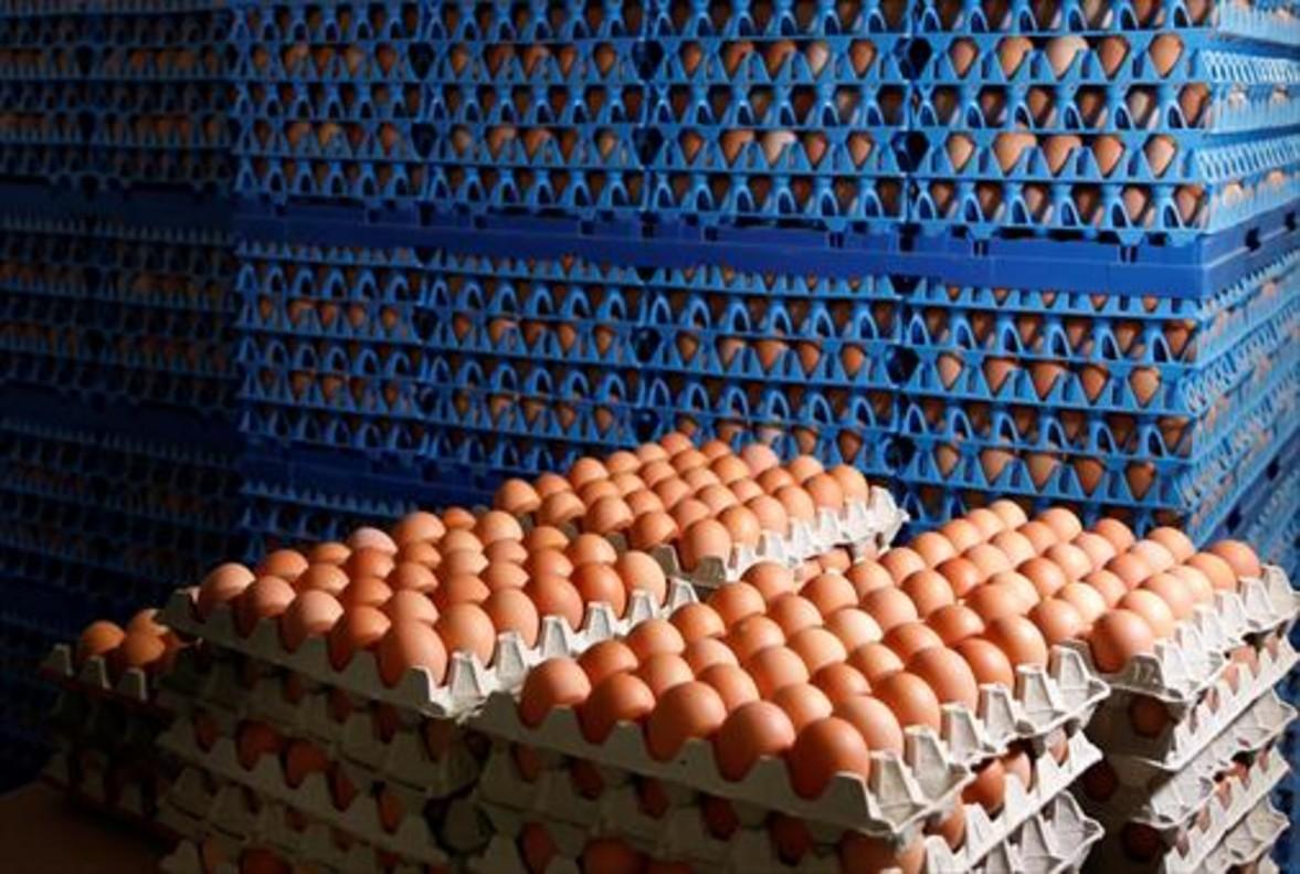 Huevos envasados para la venta en una granja de Wortel (Belgica), ayer.
