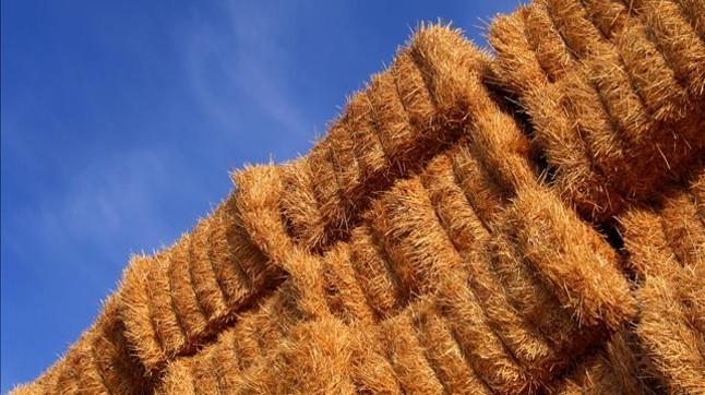 Balas de paja en un campo de cereales