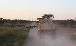 Un camión conduciendo por un camino en Tanzania.